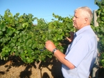 Bob in the vineyard