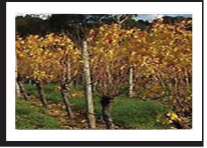 autumnvines