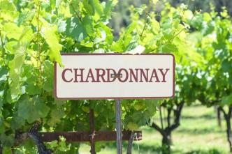 chardonnaysign